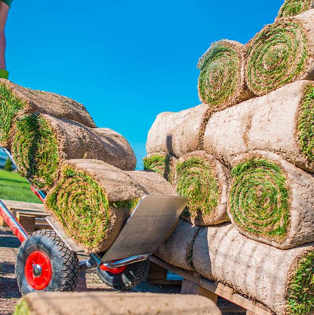 trawa z rolki piła