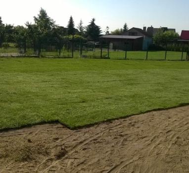 zakładanie trawnika z siewu chodzież